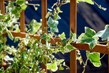 hochbeet rankgitter bepflanzt