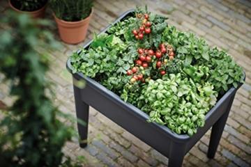 Anzuchttisch bepflanzt