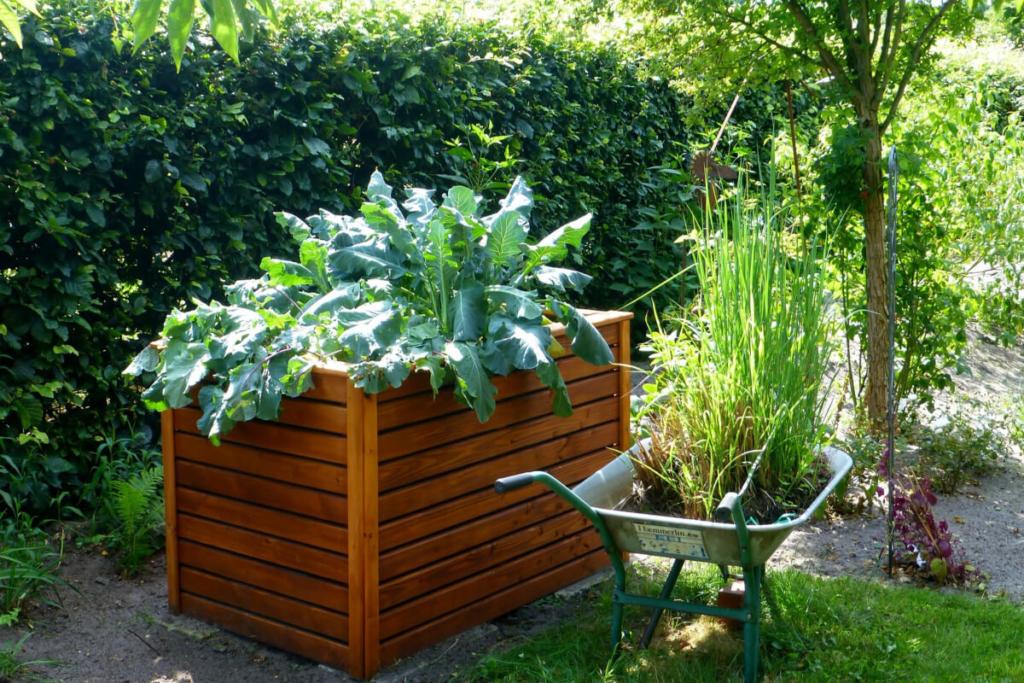 Hochbeete mit Salat bepflanzt