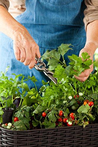hochbeet rattan bepflanzung