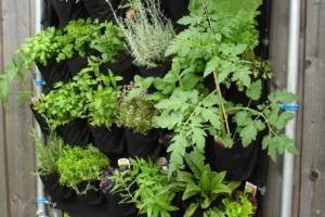 Kräuterschnecke bepflanzen