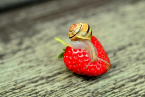 Hochbeet anlegen gegen schnecken