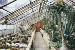 tropische pflanzen im gewekshaus