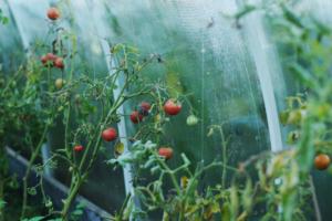 Ein Tomatenhaus kaufen für mehr Erfolg macht Sinn